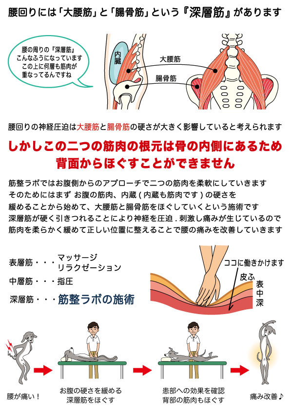 腰回りには大腰筋と腸骨筋という深層筋があります 腰回りの神経圧迫は大腰筋と腸骨筋の硬さが大きく影響していると考えられます しかしこの二つの筋肉の根元は骨の内側にあるため背面からほぐすことはできません 筋整ラボではお腹側からのアプローチで二つの筋肉を柔軟にしていきます そのためにはまずお腹の筋肉、内臓 内臓も筋肉です の硬さを緩めることから始めて大腰筋と腸骨筋をほぐしていくという施術です 深層筋が硬く引きつれることにより神経を圧迫、刺激し痛みが生じているので筋肉を柔らかく緩めて正しい位置に整えることで腰の痛みを改善していきます